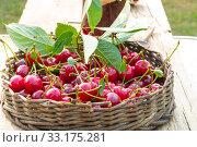 Купить «cherry», фото № 33175281, снято 27 мая 2020 г. (c) PantherMedia / Фотобанк Лори