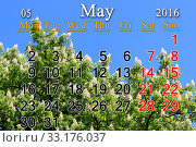 calendar for May 2016 with blossoming chestnut. Стоковое фото, фотограф Alexander Matvienko / PantherMedia / Фотобанк Лори