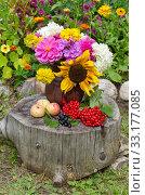 Купить «Букет цветов в глиняном кувшине, яблоки и ягоды калины и черноплодной рябины на старом пне в осеннем саду», фото № 33177085, снято 13 августа 2019 г. (c) Елена Коромыслова / Фотобанк Лори