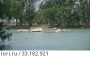 Swans far on the island. Стоковое видео, видеограф Kozub Vasyl / Фотобанк Лори