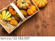 Купить «pumpkins on wood background - thanksgiving,thanksgiving,halloween», фото № 33183597, снято 5 июля 2020 г. (c) PantherMedia / Фотобанк Лори