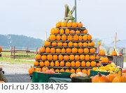 Купить «stacked pumpkins», фото № 33184765, снято 25 февраля 2020 г. (c) PantherMedia / Фотобанк Лори