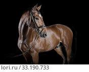 Купить «hungarian horse-riding studio», фото № 33190733, снято 27 февраля 2020 г. (c) PantherMedia / Фотобанк Лори