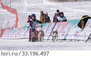 Girl mushing sled dog team, running on distance Sled Dog Racing Competition. Редакционное видео, видеограф А. А. Пирагис / Фотобанк Лори