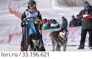 Купить «Female child mushing sled dog team, runs on distance Dog Sled Race Competitions», видеоролик № 33196621, снято 20 февраля 2020 г. (c) А. А. Пирагис / Фотобанк Лори