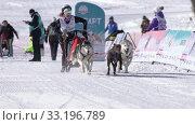 Girl mushing sled dog team, running on distance Dog Sled Racing Competition. Редакционное видео, видеограф А. А. Пирагис / Фотобанк Лори