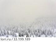 Купить «Winter mountain landscape - snowy forest in a frosty haze», фото № 33199189, снято 8 февраля 2020 г. (c) Евгений Харитонов / Фотобанк Лори