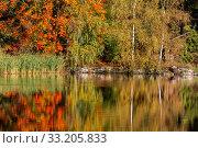 Купить «Herbstfarben Ahorn», фото № 33205833, снято 7 августа 2020 г. (c) PantherMedia / Фотобанк Лори