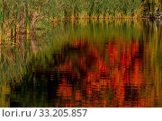 Купить «Herbstfarben Ahorn», фото № 33205857, снято 7 августа 2020 г. (c) PantherMedia / Фотобанк Лори