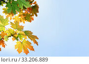 Multi-colored maple leaves against the blue sky (2006 год). Редакционное фото, фотограф Алексей Хромушин / Фотобанк Лори