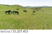 Купить «Flight over wild horses herd on mountain meadow. Summer mountains wild nature. Freedom ecology concept.», видеоролик № 33207453, снято 27 июля 2018 г. (c) Александр Маркин / Фотобанк Лори