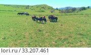 Купить «Flight over wild horses herd on mountain meadow. Summer mountains wild nature. Freedom ecology concept.», видеоролик № 33207461, снято 28 июля 2018 г. (c) Александр Маркин / Фотобанк Лори