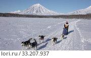 Female mushing sled dog team, running snow distance Dog Sled Racing Championship. Редакционное видео, видеограф А. А. Пирагис / Фотобанк Лори