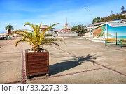 Купить «Сочи. Пальма и морской вокзал. Palm tree in a tub in Sochi», фото № 33227313, снято 20 января 2018 г. (c) Baturina Yuliya / Фотобанк Лори