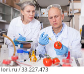 Купить «Scientists injecting additives into tomatoes», фото № 33227473, снято 24 января 2019 г. (c) Яков Филимонов / Фотобанк Лори