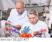 Купить «Scientists injecting additives into tomatoes», фото № 33227477, снято 24 января 2019 г. (c) Яков Филимонов / Фотобанк Лори