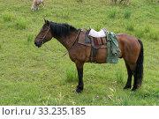 Рабочий пастуший конь с седлом и уздой стоит на пастбище. Стоковое фото, фотограф Светлана Попова / Фотобанк Лори