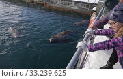 Купить «Adults and children watching for wild animal Northern Sea Lion swimming in ocean», видеоролик № 33239625, снято 4 февраля 2019 г. (c) А. А. Пирагис / Фотобанк Лори