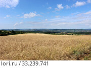 Cornfield in summer in Saarland,Germany. Стоковое фото, фотограф Hannah Wander / PantherMedia / Фотобанк Лори