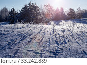 Winter landscape in the forest at sunrise or sunset. Long blue shadows on the snow on field. Стоковое фото, фотограф Кекяляйнен Андрей / Фотобанк Лори