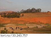 landscape at fianarantsoa. Стоковое фото, фотограф Willy Brüchle / PantherMedia / Фотобанк Лори