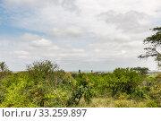 Купить «giraffe in the Masai Mara», фото № 33259897, снято 29 мая 2020 г. (c) PantherMedia / Фотобанк Лори