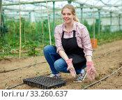 Купить «Young female horticulturist in apron and gloves planting green seedlings», фото № 33260637, снято 9 апреля 2019 г. (c) Яков Филимонов / Фотобанк Лори