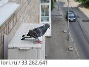 Голубь сидит на наружном блоке кондиционера, закрепленного на стене жилого дома. Стоковое фото, фотограф Илюхина Наталья / Фотобанк Лори