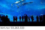 Купить «Oceanarium in Japan», фото № 33263333, снято 3 июня 2020 г. (c) PantherMedia / Фотобанк Лори