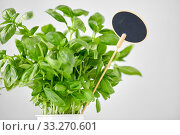 close up of basil herb with name plate in pot. Стоковое фото, фотограф Syda Productions / Фотобанк Лори