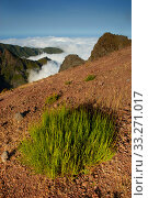 High in the mountains above the clouds near Pico de Arieìro Madeira. Стоковое фото, фотограф Edwin Giesbers / Nature Picture Library / Фотобанк Лори
