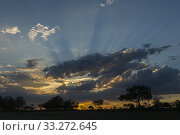 Купить «Dramatic clouds and sunrays over silhouetted trees at sunset in the Jao Concession, Okavango Delta in Botswana.», фото № 33272645, снято 11 декабря 2019 г. (c) age Fotostock / Фотобанк Лори