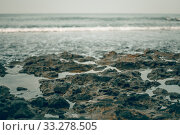 Skeleton of green-gray coral reef on the shore at the water's edge in Hikkaduwa, Sri Lanka (2019 год). Стоковое фото, фотограф katalinks / Фотобанк Лори