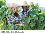 Winemakers checking grapes quality. Стоковое фото, фотограф Яков Филимонов / Фотобанк Лори