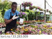 Купить «African American florist working in sunny greenhouse», фото № 33283009, снято 19 апреля 2018 г. (c) Яков Филимонов / Фотобанк Лори