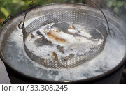 Купить «Small fish is cooked in a pot according to the traditional recipe for fish soup», фото № 33308245, снято 14 июля 2019 г. (c) Олег Белов / Фотобанк Лори