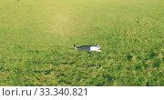 Купить «Low orbital flight around man on green grass with notebook pad at yellow rural field.», видеоролик № 33340821, снято 21 марта 2019 г. (c) Александр Маркин / Фотобанк Лори