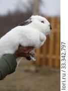 Купить «White rabbit on the street», фото № 33342797, снято 26 января 2020 г. (c) Марина Володько / Фотобанк Лори