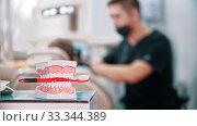 Plastic model of jaws with a toothbrush - man dentist doing his work on the background. Стоковое видео, видеограф Константин Шишкин / Фотобанк Лори