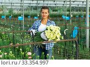 Купить «Woman gardener with bouquet of white carnations in orangery», фото № 33354997, снято 14 августа 2019 г. (c) Яков Филимонов / Фотобанк Лори