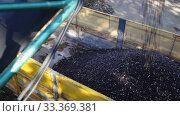 Купить «Freshly harvested olives uploaded in truck for transportation to processing factory», видеоролик № 33369381, снято 26 ноября 2019 г. (c) Яков Филимонов / Фотобанк Лори