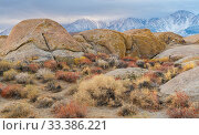 Deeply weathered granite boulders and buckwheat (Eriogonum) below the snow covered Sierra Nevada Mountains, in the Alabama Hills, California, USA, November. Стоковое фото, фотограф John Shaw / Nature Picture Library / Фотобанк Лори