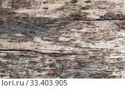 Купить «Old weathered gray wooden plank close-up», фото № 33403905, снято 7 марта 2020 г. (c) EugeneSergeev / Фотобанк Лори