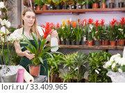 Купить «Woman florist working in floral shop, watering flowers in pots with spray bottle», фото № 33409965, снято 20 мая 2019 г. (c) Яков Филимонов / Фотобанк Лори