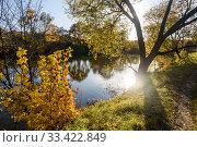 """Купить «Музей-усадьба """"Ясная Поляна"""". Золотая осень. Вид на Большой пруд солнечным днём осенью», эксклюзивное фото № 33422849, снято 3 октября 2019 г. (c) Игорь Низов / Фотобанк Лори"""