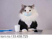 Fluffy cat in a medical mask at the workplace during a pandemic. Стоковое фото, фотограф Светлана Валуйская / Фотобанк Лори