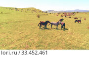 Купить «Flight over wild horses herd on mountain meadow. Summer mountains wild nature. Freedom ecology concept.», видеоролик № 33452461, снято 28 июля 2018 г. (c) Александр Маркин / Фотобанк Лори