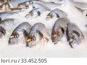 Fresh chilled dorado fish lies in ice on a store counter. Стоковое фото, фотограф Акиньшин Владимир / Фотобанк Лори