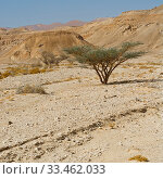 Купить «Life in a lifeless infinity of the Negev Desert in Israel. Breathtaking landscape and nature of the Middle East.», фото № 33462033, снято 6 июля 2020 г. (c) easy Fotostock / Фотобанк Лори