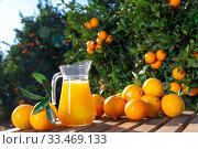 Glass jug and glasses with fresh orange juice on wooden table with oranges in an outdoor setting during summer. Стоковое фото, фотограф Яков Филимонов / Фотобанк Лори